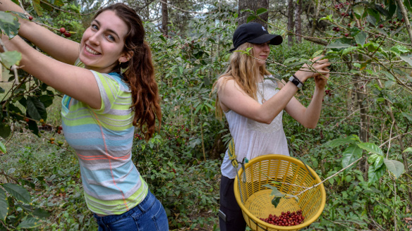 Brittany Shaheen (BA Marketing '18) and Megan Reimel (BA Supply Chain '20) picking coffee in Guatemala.