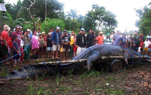 Crocodile Captured