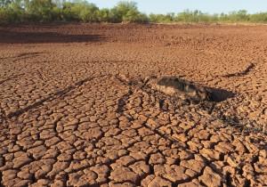Texas Drought 2