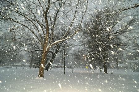Falling Snow - Photo by Serge Melki