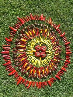 mandala van verschillende soorten pepers en paprika's