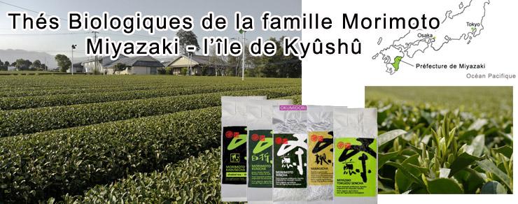 Thé biologiques de la famille Morimoto