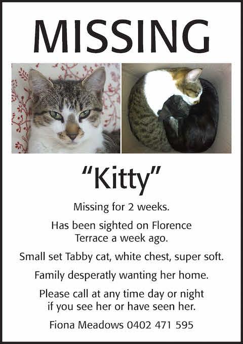 missingcat